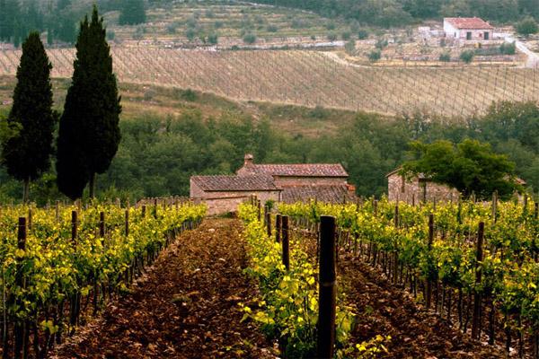 Chianti 1 in Chianti - Wein in seiner edelsten Form